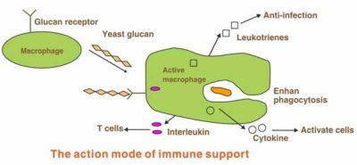 best yeast beta glucan supplements 05